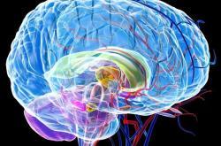 人的大腦還有潛能可以開發嗎?