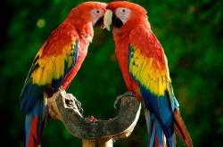 如何理解鹦鹉的行为语言